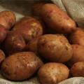 kartofel-povin